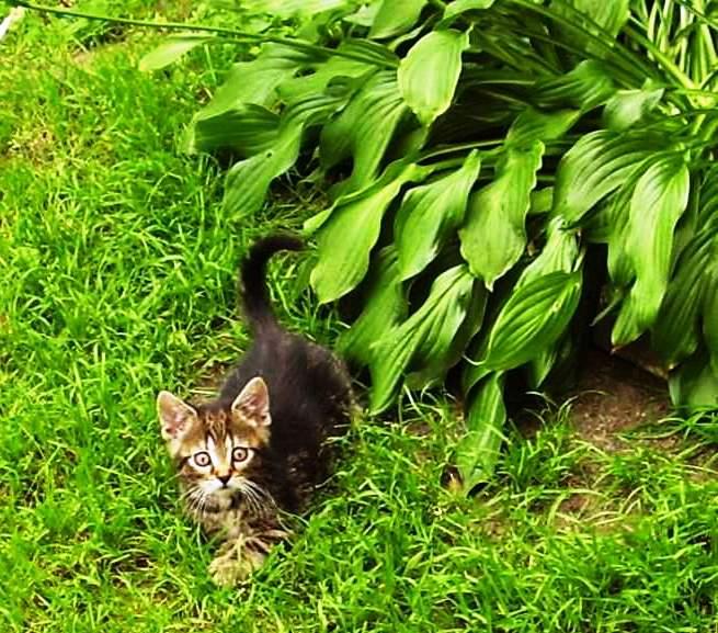 kočky z útulku