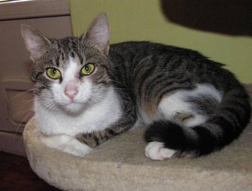 f81648871cf Možnosti vakcinace koček